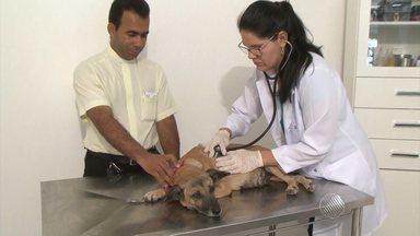 Cadelinha que acopmanha missas e velórios é levada ao veterinário - 'Menina', como é chamada pelos moradores da cidade de Tanquinho, estava com sinais de cansaço e um sangramento.