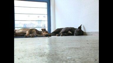 Mais de 70 cachorros estão abandonados na UFSM - O abandono de animais é um problema que piora no período das férias, quando as famílias viajam e não levam os bichinhos de estimação.