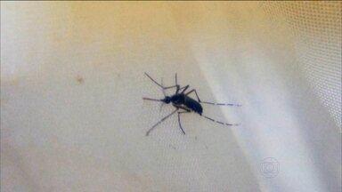 Especialistas explicam como o zika vírus está ligado à microcefalia - Transmissão do zika vírus é responsável pelo aumento dos casos de microcefalia no país. Nordeste é a região mais afetada.