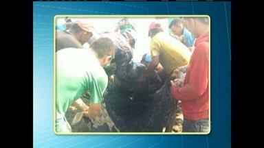 Peixe-boi é resgatado após encalhar em lago na zona rural de Alenquer - Caso não houvesse o resgate, o animal morreria. Ele foi levado para outro lago na mesma comunidade.