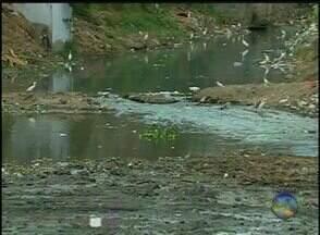 Prefeitura de Caruaru cria 'Barreira Ecológica' para combater Aedes aegypti - Trabalho é realizado no canal do Riachão.