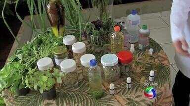 Farmacêutica de Cuiabá ensina como fazer inseticidas naturais - Farmacêutica de Cuiabá ensina como fazer inseticidas naturais