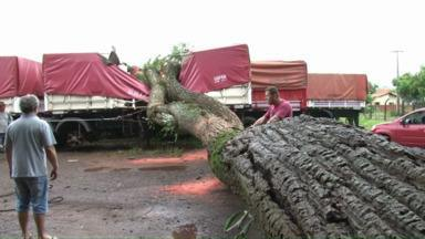 Ventos de 90km/h causam estragos em cidades da região oeste do Paraná - Em Marechal Cândido Rondon, árvores foram arrancadas pela raiz e postes de energia caíram. Já em Corbélia, por causa da chuva uma cratera foi aberta em uma rua.