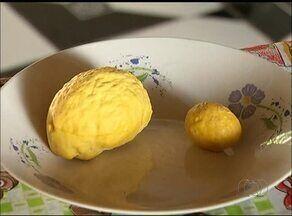 Pequizeiro produz fruto de até 2kg no sul do estado - Pequizeiro produz fruto de até 2kg no sul do estado