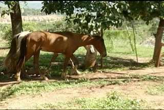 Carroceiros reclamam falta de cuidados aos animais apreendidos em Montes Claros - Por outro lado, município acusa maus tratos pelos carroceiros.