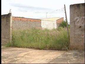 Terrenos abandonados são alvos de reclamação - Locais podem ser criadouros do Aedes aegypti.