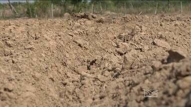 No Sul do Maranhão, a estiagem prolongada prejudica pequenos agricultores - No Sul do Maranhão, a estiagem prolongada prejudica pequenos agricultores
