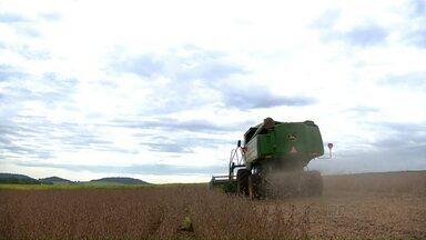 Agricultores começam a colheita da soja na região oeste do Paraná - Apesar das chuvas dos últimos dias, a produção foi boa.