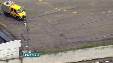 Cachorro invade pista e fecha Aeroporto de Congonhas em SP - O cachorro invadiu a pista e provocou o fechamento para pousos e decolagens do Aeroporto de Congonhas, na Zona Sul de São Paulo, no início da noite da terça-feira (12). O animal foi localizado na pista às 18h15.