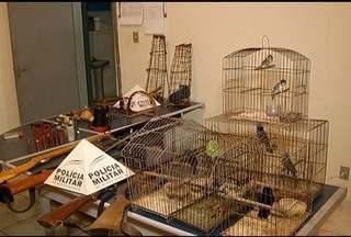 Polícia encontra material de caça e animais silvestres em Nova Esperança - O dono da residência foi preso.
