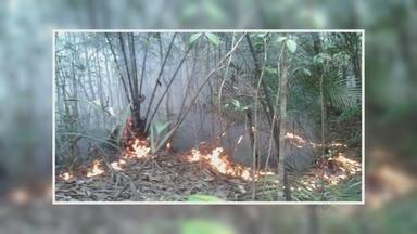 Incêndio em Novo Airão já destruiu mais de 2 Km de mata às margens de cachoeira - Oito homens da defesa civil do município foram deslocados para a área e trabalham junto com vigilantes do Instituto Chico Mendes de Conservação e comunitários para apagar o fogo.
