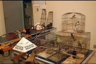 Homem é preso em Montes Claros suspeito de caçar animais silvestres - Várias munições foram apreendidas na casa do suspeito.