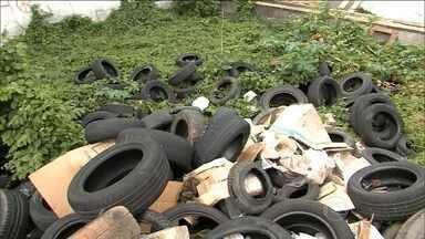 Descartar pneus de forma correta é essencial para evitar Aedes aegypti - Destino dos pneus velhos é um problema nas grandes cidades do país. Em São Luís, há amontoado de pneus jogados na entrada da cidade.