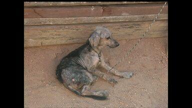 Em Santarém, caso confirmado de calazar humano preocupa donos de cachorros - Se alguém tiver um animal que apresenta alguma suspeita, a orientação procurar o CCZ.
