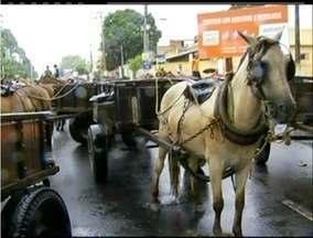 Carroceiros de Campos, RJ, realizam novo protesto contra lei de uso de tração animal - Determinação proíbe o uso de cavalos e burros para transporte humano ou de carga.