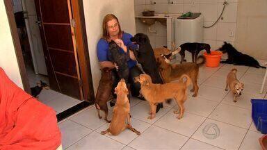 Prefeitura de Cuiabá cobra prazo para resolver o problema dos animais abandonados - Prefeitura de Cuiabá cobra mais prazo para resolver o problema dos animais abandonados nas ruas
