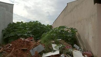 Moradores de Bauru se preocupam com leishmaniose na cidade - Uma das preocupações dos moradores de Bauru é com a leishmaniose. A doença é transmitida pelo mosquito palha, que gosta muito de terrenos úmidos e sujos. Por isso, a limpeza desses locais é fundamental para acabar com esse bichinho.