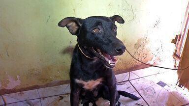 Animais abandonados são resgatados de residência em Tangará da Serra - Animais abandonados são resgatados de residência em Tangará da Serra