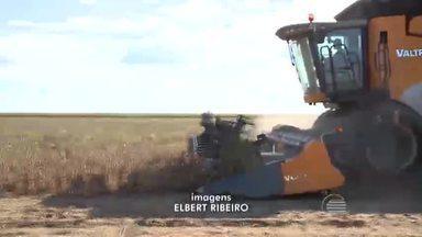 Colheita de grãos nos Cerrados piauienses se destaca no Brasil - Colheita de grãos nos Cerrados piauienses se destaca no Brasil