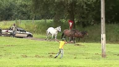 Cavalos soltos causam transtorno à beira da rodovia - Funcionários da concessionária ficaram de olho para evitar que os bichos causassem um acidente