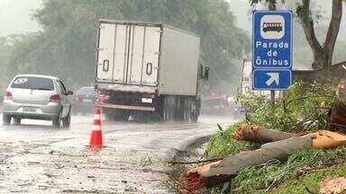 Árvore cai sobre a pista e interrompe trânsito na Dutra, em Barra Mansa - Congestionamento ultrapassou 4 km no trecho; ninguém ficou ferido.