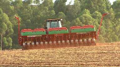 Agricultores tem pressa para colher a soja - Depois de semanas de chuva neste mês muitos agricultores aproveitam o tempo mais firme dos últimos dias para colher a soja.