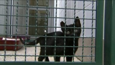 Centro de zoonoses inaugura núcleo para adoção de cães e gatos - O núcleo do Centro de Controle de Zoonoses, em Santana, na Zona Norte da capital, tem 350 animais à espera de um lar definitivo.
