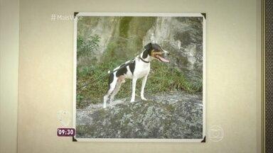 Cãozinho Fubá some de hotel para cachorros no Rio de Janeiro - Confira o caso e a batalha dos donos para encontrá-lo