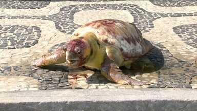 """Tartaruga é encontrada morta no calçadão de Ipanema - Biológos disseram que ela é da espécie """"Cabeçuda"""" e que pesa cerca de 140 quilos"""