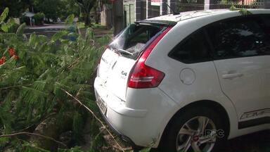 Parte de uma árvore despenca sobre carro e interdita rua - Além do prejuízo com o veículo o morador não sabia a quem recorrer para fazer a retirada da árvore.