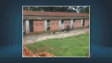 Cães do canil de Joaquim Egídio estavam em situação deplorável, segundo veterinários - Animais viviam confinados em baias, sem contato com pessoas. Alguns deles foram encontrados doentes e sem comida.
