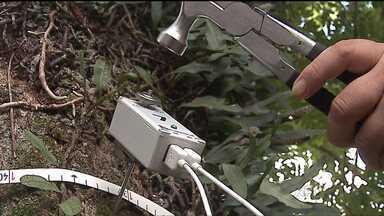 Estudantes identificam árvores velhas de São Mateus do Sul - O projeto é da Universidade Tecnológica Federal do Paraná e identifica que árvores devem ou não serem cortadas!