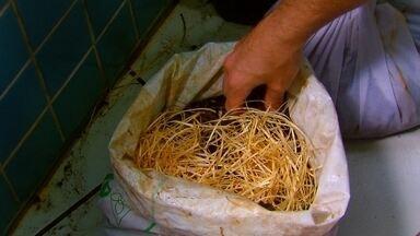 Veja como fazer compostagem - Professor universitário que já plantou e distribuiu 20 mil mudas no Recife ensina como fazer compostagem.