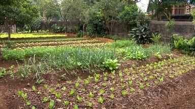 Moradores transformam terrenos baldios em hortas orgânicas em SP - Organização negocia com os donos a utilização dos terrenos na Zona Leste de SP e ensina as técnicas de plantação. Já são 115 famílias beneficiadas.