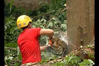 Árvore com risco de queda precisou ser retirada e trânsito foi interditado, em Belém - O trecho interditado foi o da travessa 9 de Janeiro, ao lado do Museu Emílio Goeldi.