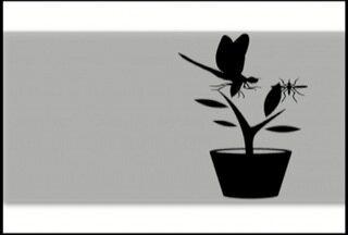 Planta que atrai libélula para se alimentar das larvas do Aedes é distribuída em Búzios - Uso da crotalária para controle do mosquito é conhecido no país.