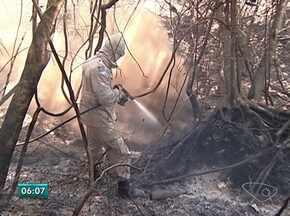 Incêndio continua em Sooretama, ES - Tempo seco e vento tem atrapalhado o trabalho de combate as chamas.