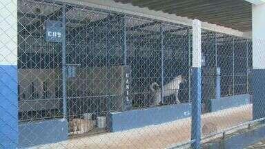 Campinas tem mais de 140 casos de acumuladores de animais - Muitas vezes os animais vivem em condições precárias. Agora um projeto pretende mudar isso.
