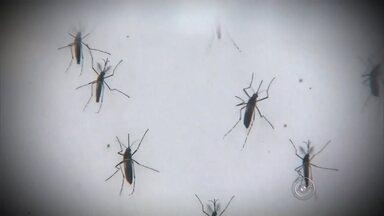 Pesquisas em laboratório revelam quais são as preferências do Aedes aegypti - Algumas curiosidades que tem a ver com o mosquito da dengue. Pesquisas e testes feitos em laboratório revelaram quais são as preferências do Aedes aegypti. Além de perigoso, ele é exigente.