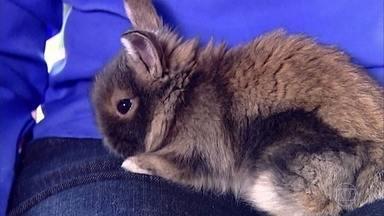 Conheça diferentes raças de coelhos - O animal é um dos símbolos da Páscoa e o bichinho de estimação de muita gente