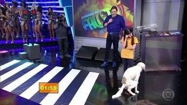 Garotada & Cachorrada: veja a terceira apresentação deste domingo - Circuito Cotidiano é a primeira fase do quadro