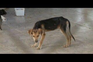 Ong aponta situação precária e falta de manutenção no canil municipal de Rio das Ostras - Animais mortos foram encontrados no local.