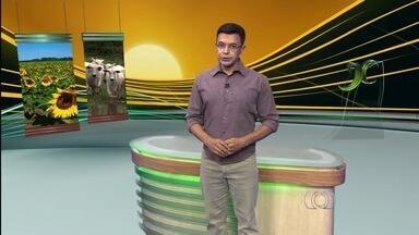 Veja os principais destaques do Jornal do Campo deste domingo (10) - Entre os principais assuntos desta edição está o evento Tecnoshow, em Rio Verde.