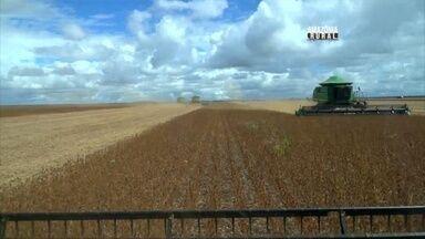 Acompanhe a colheita da soja em Rondônia - Estado é considerado a nova fronteira agrícola do Brasil.