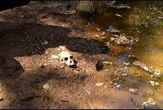 Secretaria de Estado de Saúde investiga suspeita de febre amarela no Norte de MG - Suspeita surgiu depois que macacos foram encontrados mortos, população está sendo imunizada.