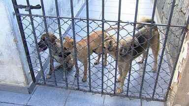 Agressão a animais é caso de polícia e dá cadeia - Agressão a animais é caso de polícia e dá cadeia.