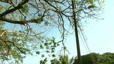 Moradores reclamam de galhos que ficam muito próximos à rede elétrica - A cada ventania, moradores ficam sem energia.