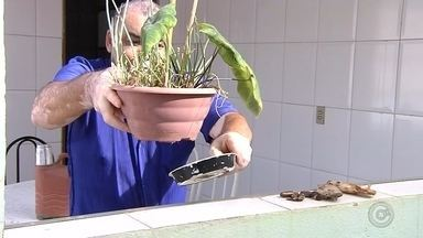 Com mais de dois mil casos, Birigui registra morte por dengue - A Secretaria de Saúde de Birigui (SP) confirmou nesta quinta-feira (14) uma morte por causa da dengue na cidade. A vítima é um jovem, de 28 anos, que morava no bairro Monte Líbano. Esta é a segunda morte por causa da doença neste ano.