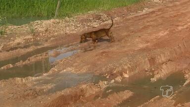 JT flagra cano estourado e desperdício de água no bairro Maracanã em Santarém - O problema é na rua Cáritas. Segundo os moradores esse desperdício está acontecendo ha pelo menos 60 dias.
