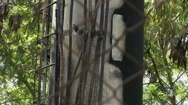 Bandidos voltam a fazer ataques incendiários em antenas telefônicas e delegacias no Ceará - Bandidos voltam a fazer ataques incendiários em antenas telefônicas e delegacias no Ceará